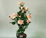 ばら(バラ・薔薇)1本立 (ライトピンク)光触媒とアミノ酸のダブルコーティング 消臭力と抗菌力を発揮するアートフラワー(造花)【smtb-s】