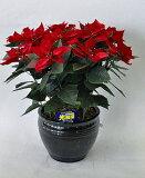 ポインセチア 光触媒アートフラワー(造花)クリスマスシーズンのお部屋に定番のポインセチアはいかがですか。クリスマスのプレゼントやお歳暮ギフトにも喜ばれます。【smtb-s】
