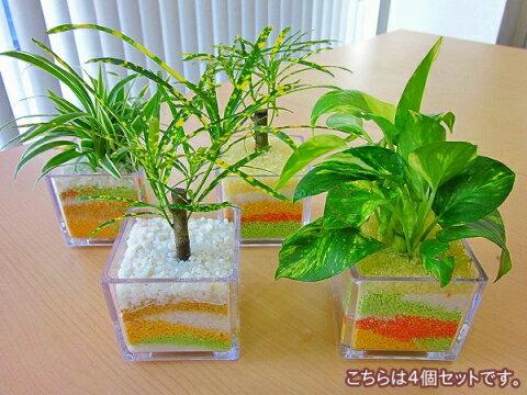 ハイドロカルチャー観葉植物 スクエア(4個セット)ミニサイズのスクエア鉢にペットボトルが原…...:bloomgrace:10001629