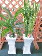 観葉植物 白角スタンド 陶器鉢 7号 2鉢セット 鉢植え 販売 苗 苗木 送料無料 インテリア 贈り物 ギフト お誕生日 記念日 開店祝い ソテツ サンスベリア サンデリアーナ ガジュマル