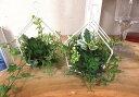 インテリア・グリーン二個セット枯れないグリーン・多肉植物父の日プレゼント・グリーンアレンジ 【造花】アートフラワー・アイビー【光触媒】【CT触媒】エコな生活