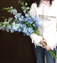 サムシング・ブルーの花束「デルフィニュウム」5本入り【お買い物マラソン06】【お買い物マラソン06m...