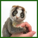 ハンサ スローロリス[7043] 17-slow loris-気になる存在、スローロリスさんお迎えしました!HANSAのリアルな動物ぬいぐるみです。