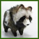 ハンサ タヌキ(たぬき)[7256]-Racoon Dog-HANSAのリアルな動物ぬいぐるみです。