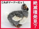 【ハンサ】ドードー(大)【HANSA】[Art.5028]DODO BIRD-ドードー鳥- どーどーぬいぐるみ[リアル 動物園 アニマル インテリア]