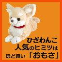 サンレモン ひざわんこチワワ【クリーム】[P-3002]...