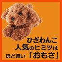 サンレモン ひざわんこトイプードル【ブラウン】[P-3032]犬 いぬ イヌ ワンちゃん ワンコ ひ