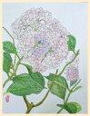 【送料無料】 紫陽花  日本画