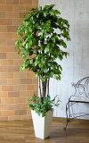 ナチュラルベンジャミン160cm※配送は2015年1月28日以降になります。【(九州・中国・四国・北海道は有料)】【smtb-s】【造花】【人工観葉植物】【光触媒】