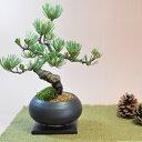 盆栽 枝ぶりの良い五葉松の盆栽 丸和鉢仕立て【盆栽 松 上品な趣と情緒あふれるたたずまい。 盆景 情