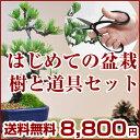 はじめての盆栽セット 長寿梅か五葉松と10点道具セット【ミニ盆栽 入門 初心者 これから 始める 道