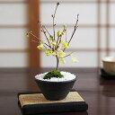 姫水木 縁起の良い花の咲く盆栽 花盆栽 鉢植え ミニ盆栽 ギフト 贈り物 おしゃれ モダン インテリア 鉢花 縁起