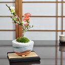 紅白長寿梅 長寿宝 花盆栽 鉢植え 咲き分け ギフト 贈り物 おしゃれ モダン インテリア 鉢花 和盆栽
