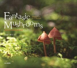 FantasticMushroom����������������2015��