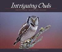 Intriguing_Owls��_Extraordinary
