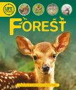 Life Cycles: Forest LIFE CYCLES FOREST (Lifecycles) [ Sean Callery ]