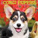 Just Corgi Puppies [ Willow Creek Press ]