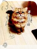 しょんぼり顔のモフモフ猫ふーちゃんやけども。