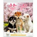 カレンダー 2020年 壁掛け 森田米雄・まるごと柴犬 ACL-11 手帳 (ダイアリー)