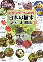 ひと目で見分ける340種 日本の樹木ポケット図鑑 [ 増村征夫 ]