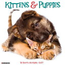 Kittens & Puppies [ Willow Creek Press ]