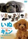 いぬキュン 癒しのわんこシアター We Love Dog