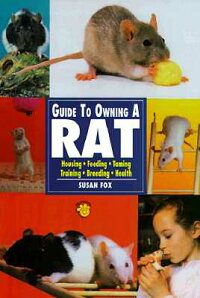 Guide_to_Owning_a_Rat