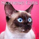 Siamese Cats [ Willow Creek Press ]