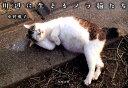川辺に生きるノラ猫たち [ 中野楓子 ]