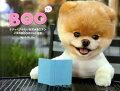 BOO イヌのBOOのフォト日記