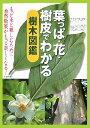 葉っぱ・花・樹皮でわかる樹木図鑑 [ 池田書店 ]