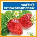 Watch a Strawberry Grow WATCH A STRAWBERRY GROW (Watch It Grow)