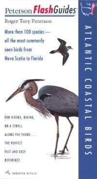 Atlantic_Coastal_Birds