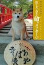 捨て犬・未来命のメッセージ [ 今西乃子 ]