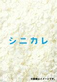 シニカレ完全版 DVD-BOX [ 藤ヶ谷太輔 ]