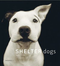 Shelter_Dogs