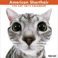 アメリカン・ショートヘア カレンダー 2012