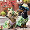 Crusoe the Celebrity Dachshund 2021 Mini Wall Calendar (Dog Breed Calendar) CRUSOE THE CELEBRITY DACHSHUND [ Ryan Beauchesne ]