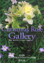Christmas rose gallery