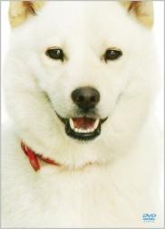 初回限定生産 日本で一番有名な白犬 カイくんのDVD発売決定
