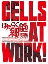 はたらく細胞 特別編(完全生産限定版)【Blu-ray】 [ 小野大輔 ]