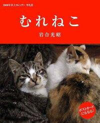 2009猫カレンダー 岩合光昭 むれねこ卓上カレンダー2009