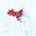 アスター (初回限定盤 CD+DVD) [ KANA-BOO...