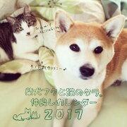 2017年リング付きカレンダー 柴犬フクと猫のタラ。仲良しカレンダー