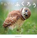 かわいいふくろう [ ♪鳥くん ]