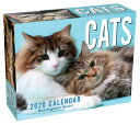 Cats 2020 Mini Day-To-Day Calendar CATS 2020 MINI DAY-TO-DAY CAL [ Andrews McMeel Publishing ]