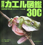 �����������300��