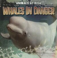 WhalesinDanger