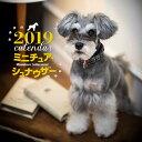 2019年大判カレンダー ミニチュア・シュナウザー [ 中村 陽子 ]