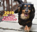 2019年ミニカレンダー ミニチュア・ダックスフンド [ 井川 俊彦 ]